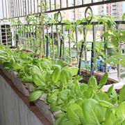 小型菜园装修设计