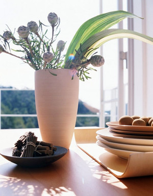 惹人怜爱 枝叶婆娑的室内盆栽植物装修效果图鉴赏