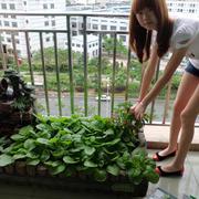 高层小区菜园装饰