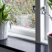 样板房窗户盆栽搭配