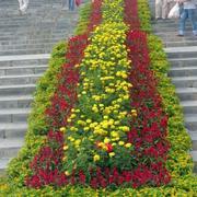 广场花坛装饰