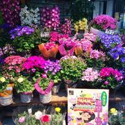 花店色彩斑斓的盆栽装饰