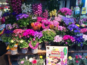 以后就开一家像这样的花店 幸福到老