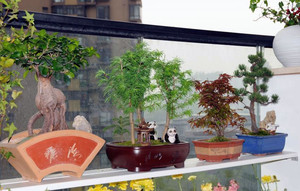 感受清新空气的露台花园装修效果图
