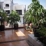 东南亚露台盆栽装饰