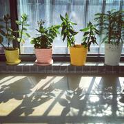 小户型阳台窗台盆栽摆设
