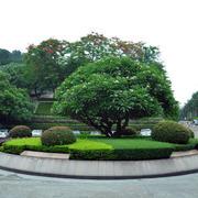 小区公园花坛布置