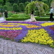 小公园花坛装修