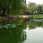 园林湖中小亭效果图