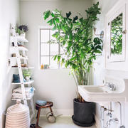 洗手间绿化设计