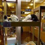 宠物店玻璃隔断设计