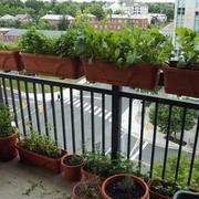 阳台盆栽摆设
