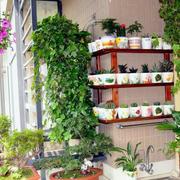 阳台小盆栽展示图片