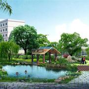 公园花草树木展示