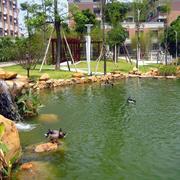公园池塘装饰图片