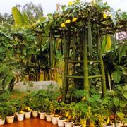绿色葱葱庭院装修图片