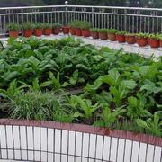 创意菜园装修图片