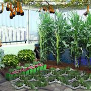 150平米韩式清新两居阳台菜园装修效果图