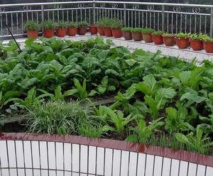 180平米现代简约风格高层阳台菜园装修效果图