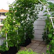 菜园架构整体设计