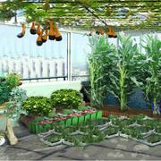 精美的菜园设计