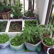 阳台漂亮盆栽展示