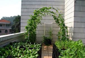 一举两得:都市大户型阳台菜园装修图