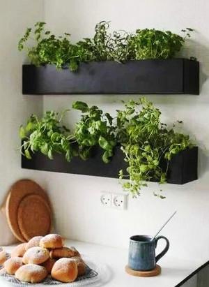 简约风格小户型室内植物背景墙效果图赏析