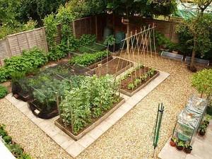 现代简约风格阳台盆栽蔬菜装修效果图