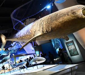 海洋博物馆装修效果图赏析