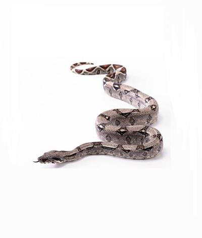 做梦梦见蛇,女人梦见蛇,男人梦见蛇