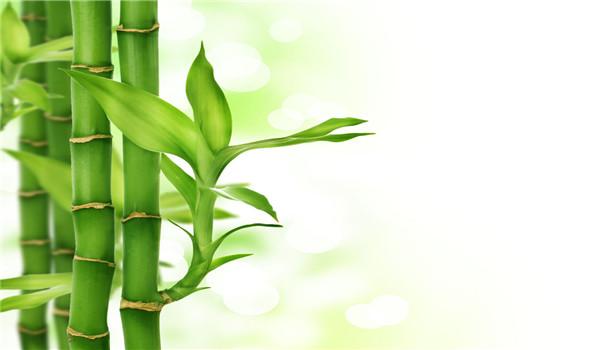 水竹叶子发黄怎么处理