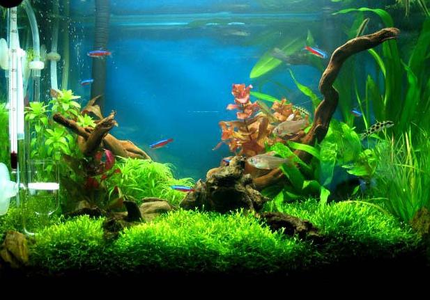鱼缸造景,在装修中体验艺术的的乐趣