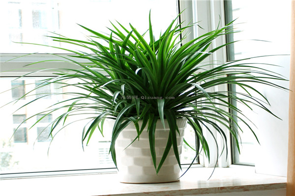如何选择适合自己的室内植物?
