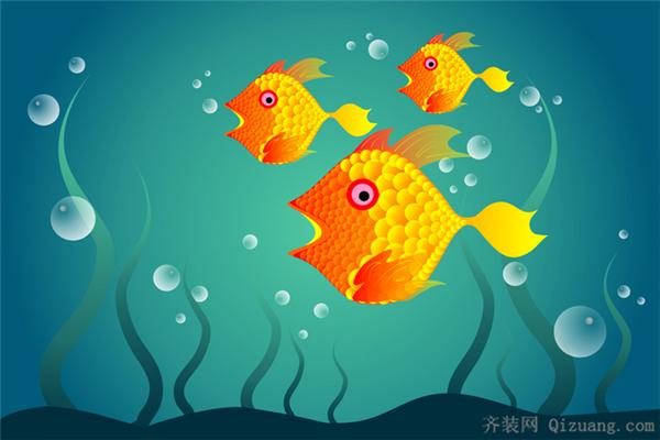 如何养好小金鱼!