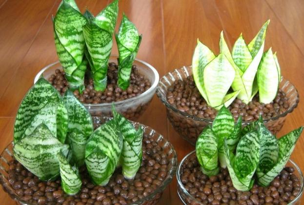 卫生间的风水植物全解析