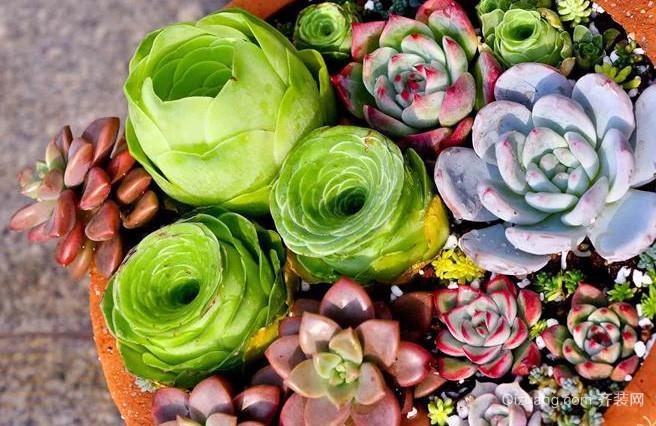 多肉植物是什么 有什么风水禁忌