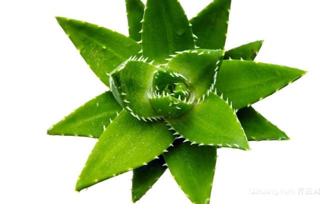绿色植物最强的七大功效作用