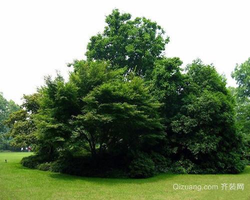 树木的作用