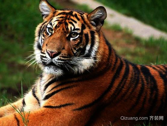 属虎的年份有哪些?2016年属虎的生肖运程