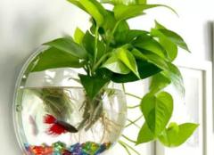 水培植物怎么换水 技巧分享给你
