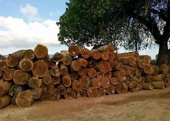 红木主要产于哪里 红木家具为什么贵