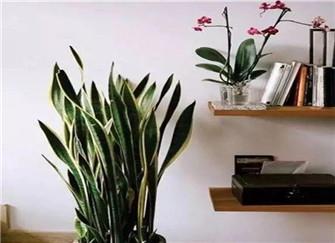 有益健康的高颜值家居绿植推荐  让你为家里增添自然气息