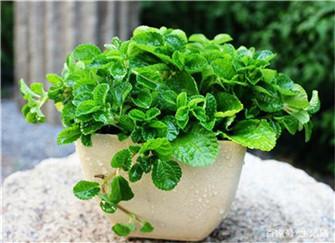 哪些植物可以吸收甲醛?这8种植物堪称净化能手