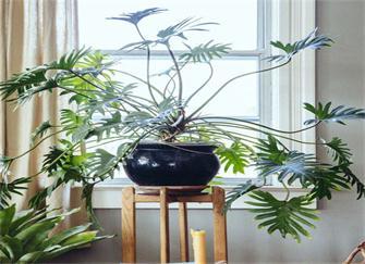 适合北欧风格植物有哪些? 这些植物和北欧更配