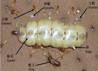 装修防白蚁怎么做 新房装修好了如何预防白蚁