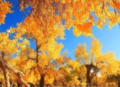 国庆节哪里旅游比较好 10月国内最佳旅游地点