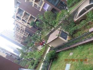 景天花园29-202