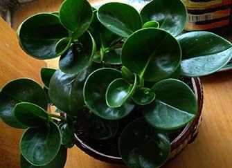 卫生间放这些植物 空气清新告别异味