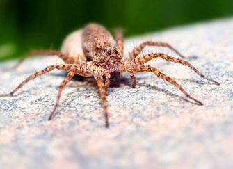 梦见大蜘蛛是什么预兆 梦见蜘蛛爬到我身上是什么意思 梦见蜘蛛爬到自己身上被吓醒